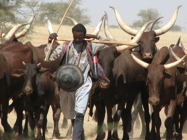 Voyage au Niger – Jacques Delnooz – Novembre 2015